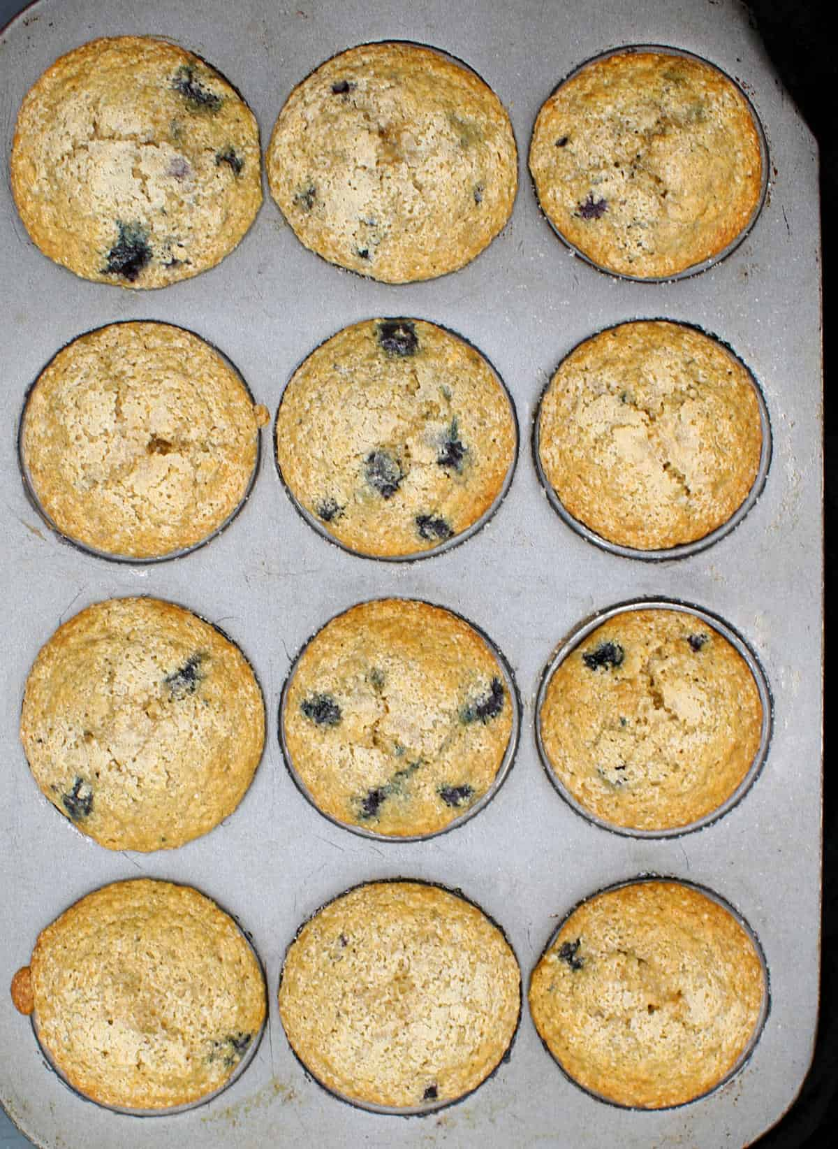 Overhead shot of blueberry vegan muffins in a baking pan.