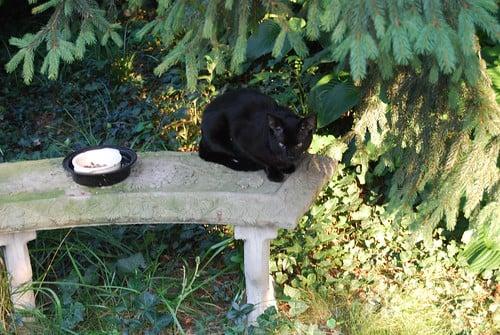 Cannoli, a black cat, sitting on a concrete garden bench