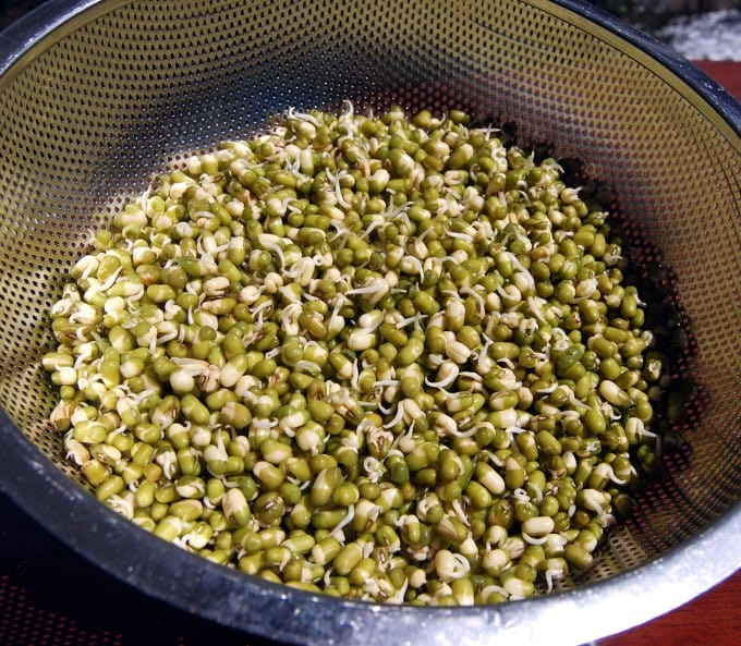 Sprouted Moong Beans