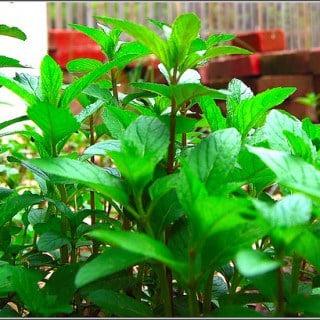 Mint Biryani With Roasted Mushrooms