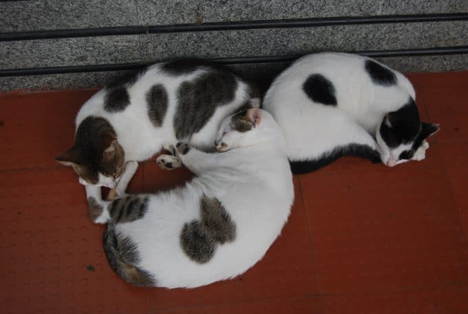 Catnapping on a busy Bombay sidewalk