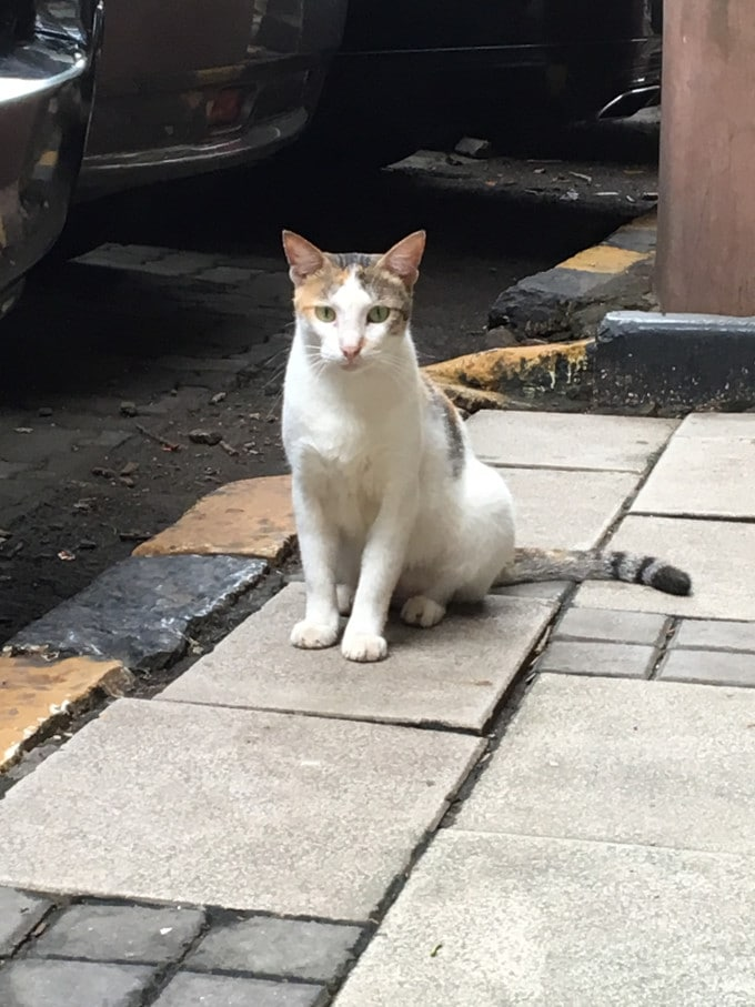 A beautiful stray cat in Bombay