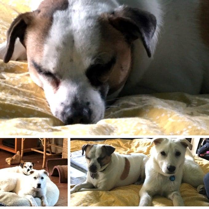 Lily my dog