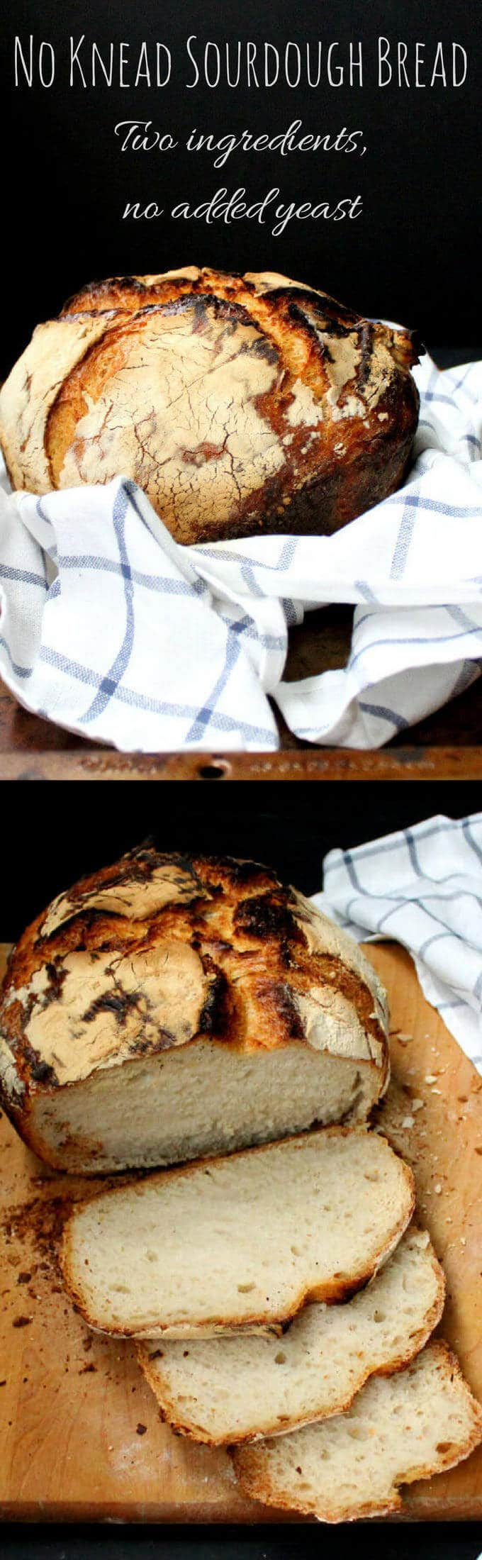 No Knead Sourdough Bread with just two ingredients #bread #sourdough #vegan - HolyCowVegan.net
