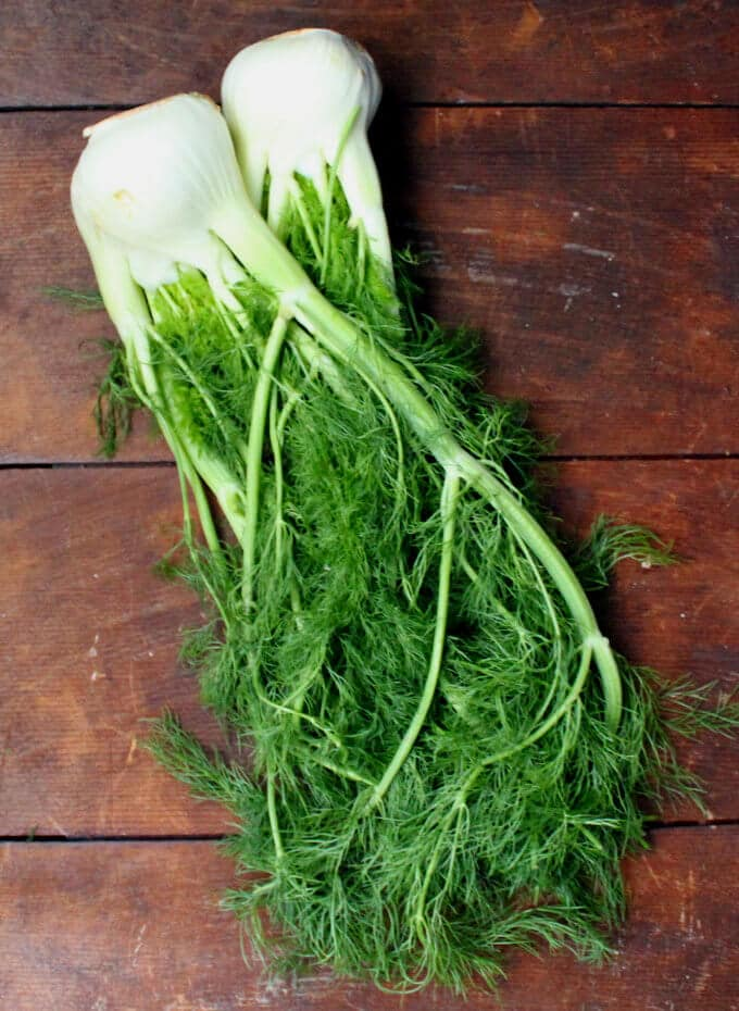 Two fennel bulbs with green fronds on a wooden background