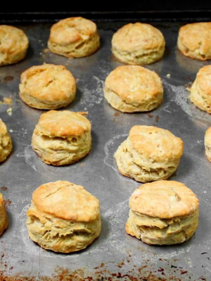 Rows of golden vegan buttermilk biscuits on a baking sheet