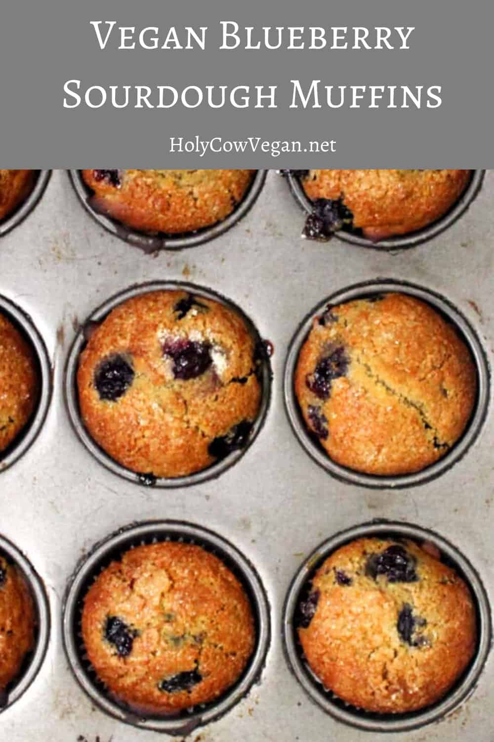 Vegan Blueberry Sourdough Muffins in a baking tin with pockets of blueberries