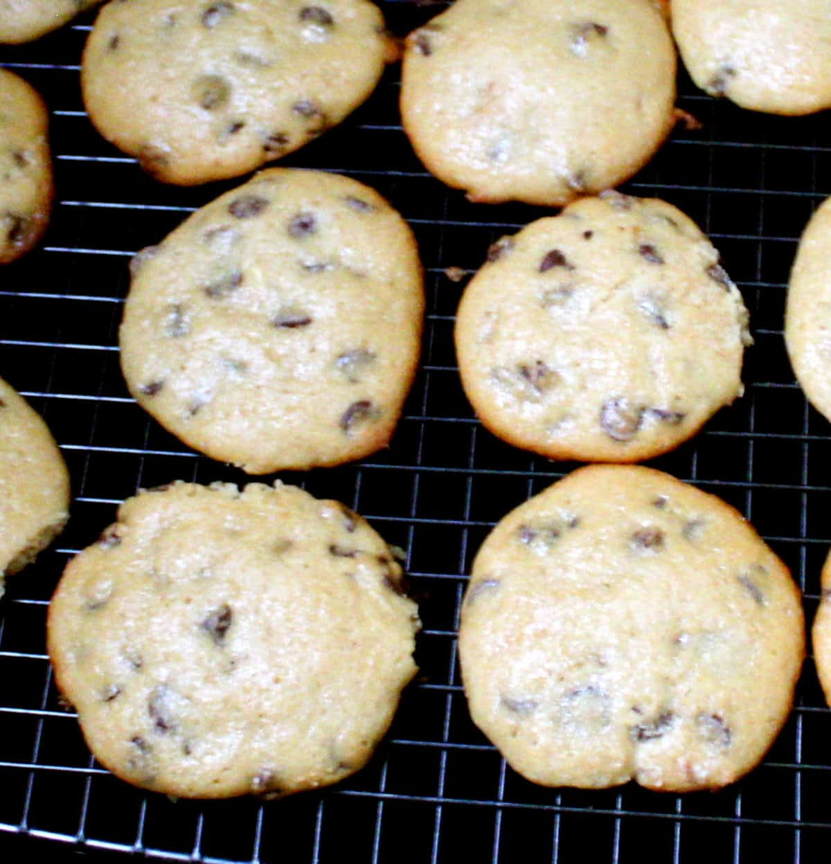 Close up of vegan sourdough cookies with chocolate chips on a cooling rack.