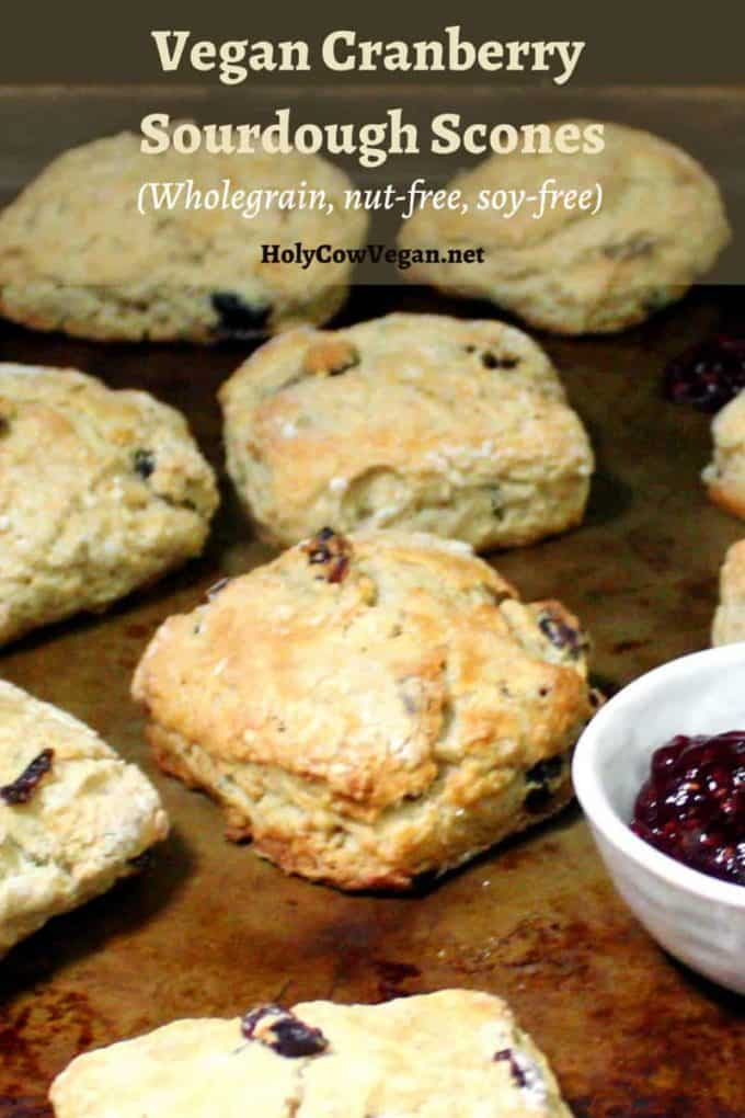 Baked vegan cranberry sourdough scones on a baking sheet with raspberry jam