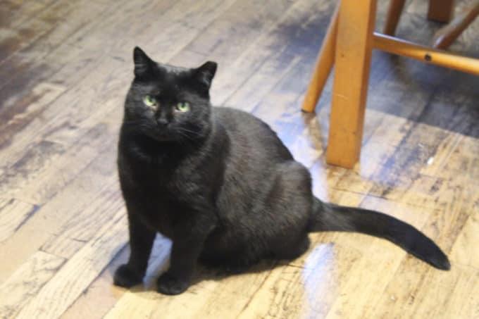 Kala my black cat