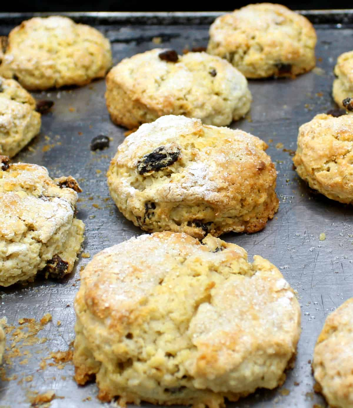 Front shot of currant vegan scones on a cookie sheet.