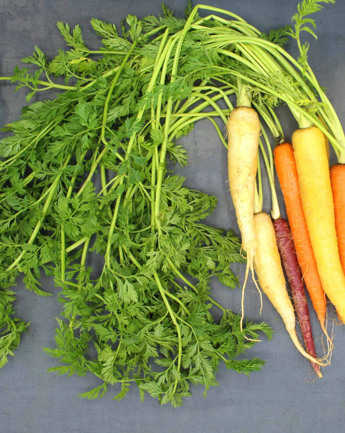Multicolored carrots with carrot greens on a gray background