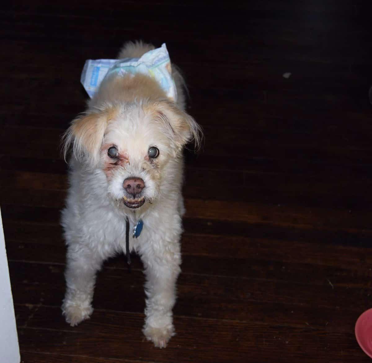 My dog Freddie