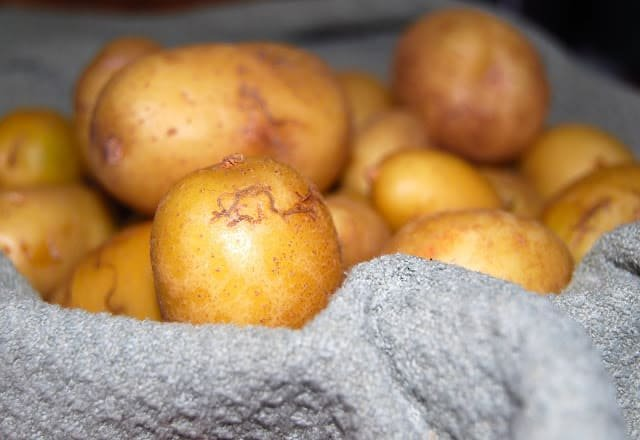 Photo of new potatoes, fresh from the garden.