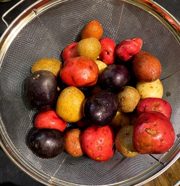 Multicolored potatoes for salad in colander